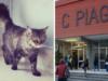 gatta istituto piaggia