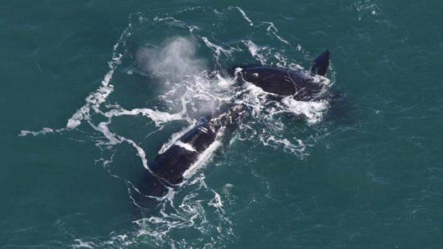 balene canada