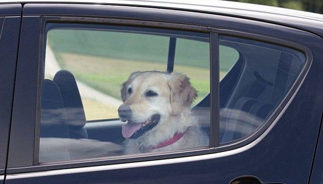 cani caldo auto