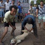 Festival Yulin, torna il crudele massacro dei cani in Cina VIDEO