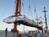 giappone caccia alle balene 5