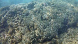 ostia barriera corallina 1