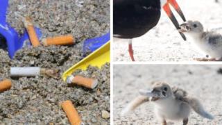 sigarette spiagge uccello