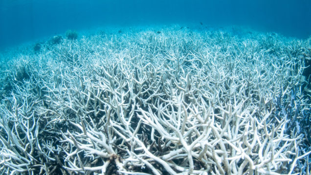Damaged Coral Reef in Australia