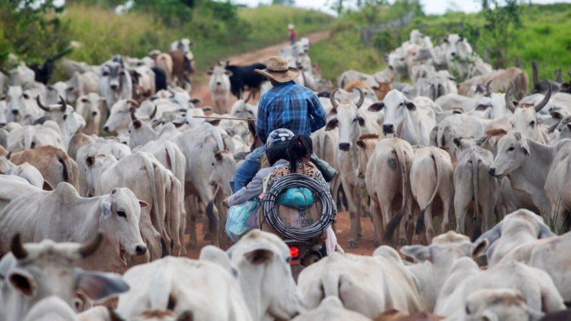 Deforestazione,la Foresta Amazzonica muore per colpa della carne
