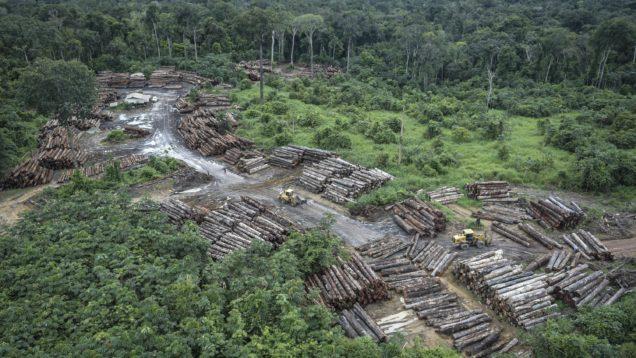 deforestazione brasile 2