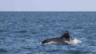 delfino 4
