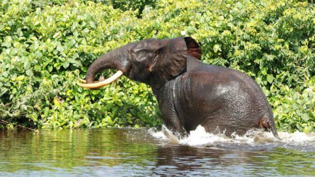 elefanti africani CO2 3-min