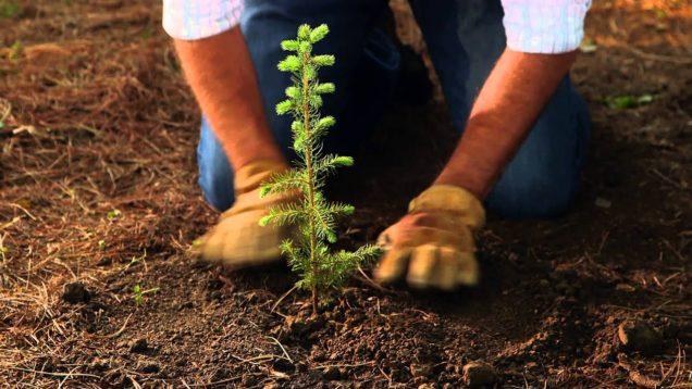 emergenza climatica soluzione alberi 1