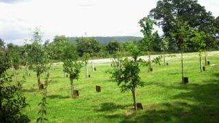 funerali eco friendly 3