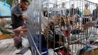 operazione salva animali