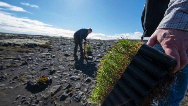 riforestazione islanda 3