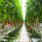 Sfera Agricola, la serra idroponica più grande d'Italia arriva a Superquark