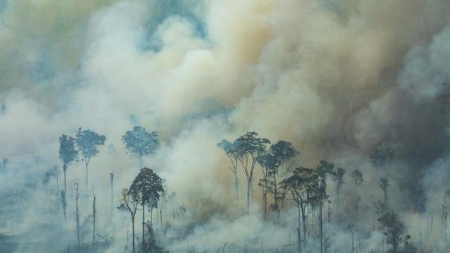 Forest Fires in Amazon – Second Overflight (2019) Queimadas na Amazônia – Segundo Sobrevôo (2019)
