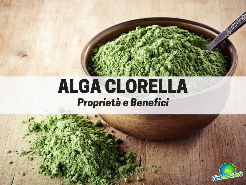 Alga Clorella, ricca di vitamine e minerali. Tutte le proprietà
