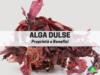 alga dulse