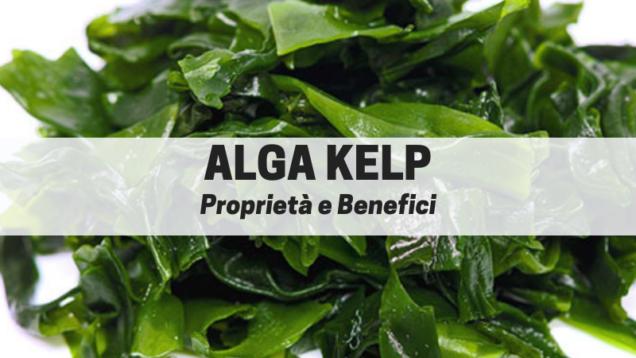 alga kelp