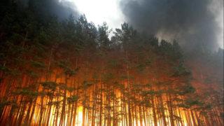 incendi Russia aggiornamento 4-min