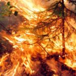 Incendi, svelate le cause del disastro in Siberia. Ma intanto la foresta brucia ancora VIDEO