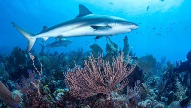 leggi protezioni oceani Cuba 6-min