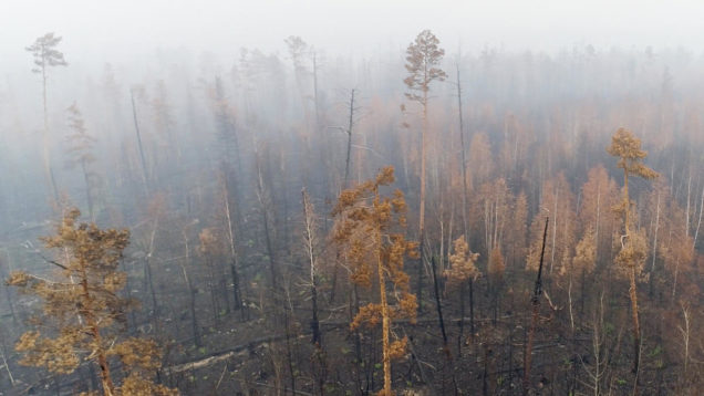 Siberian Forest Fires Aftermath