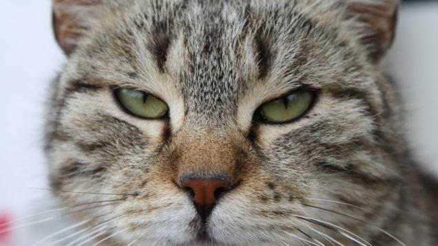 coprifuoco gatti