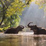 Animali, la Danimarca compra gli ultimi elefanti da circo del paese..e li libera!