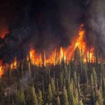 """Incendi, Greenpeace Russia: """"La Siberia brucia e il mondo tace"""". Ecco cosa sta succedendo"""