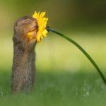 Animali, il tenero amore degli scoiattoli per i fiori di campo