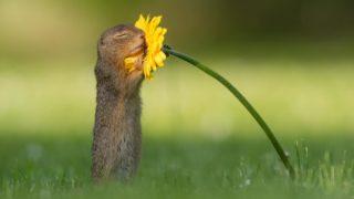 scoiattoli amano fiori 7
