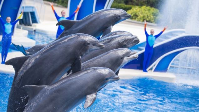 delfini tripadvisor