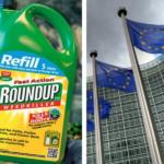 Glifosato, sentenza shock: per l' Unione Europea non è cancerogeno