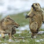 Animali, le foto vincitrici del Concorso Wildlife Photographer of the Year 2019