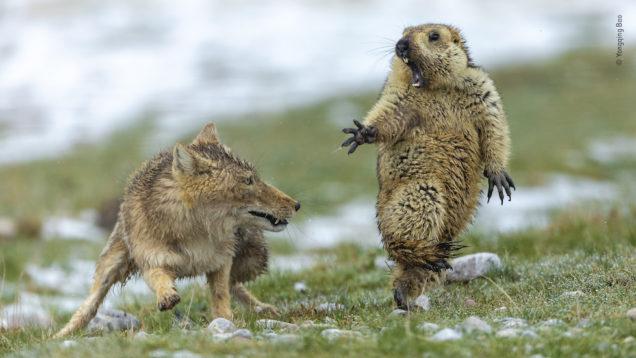 animali wildlife