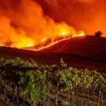California, domato l'incendio Kincad: si contano i danni.