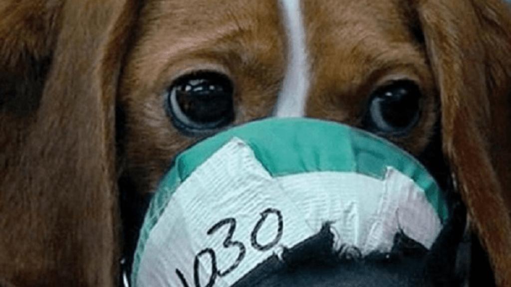 Legge sulla sperimentazione animale, in Italia è tutto da rifare