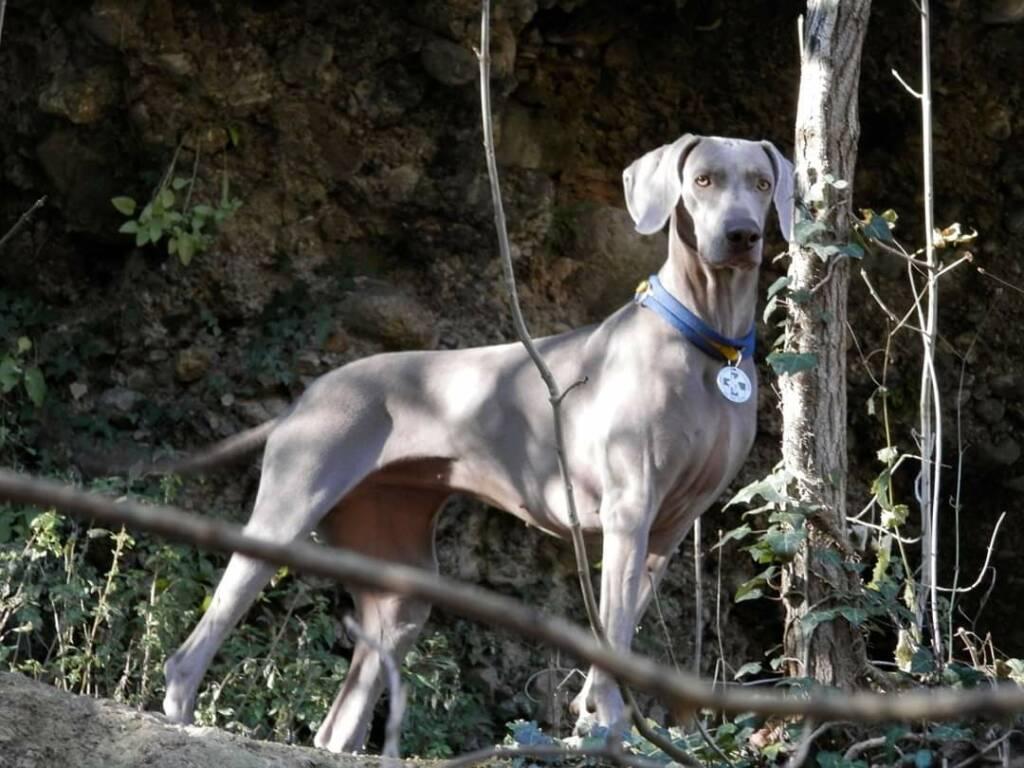 Animali, è morta Greta, la campionessa dei cani da soccorso