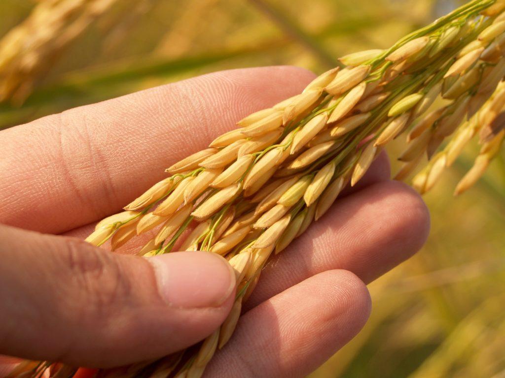 """Agricoltura, Bellanova: """"tagli su bilancio pluriennale non aiutano pac più green"""""""