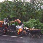 Animali, un uomo gira il Messico a piedi salvando i cani abbandonati