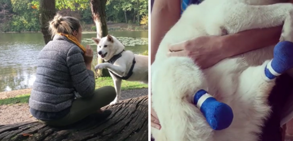 Animali, una donna inglese adotta un cane destinato al macello in Corea del Sud