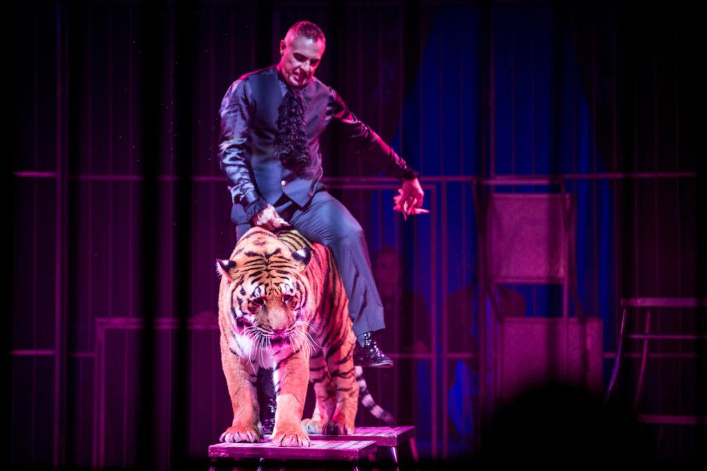 Animali, anche Parigi impone il divieto di esibizione nei circhi