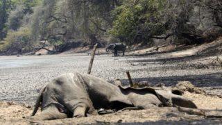 elefanti zimbabwe