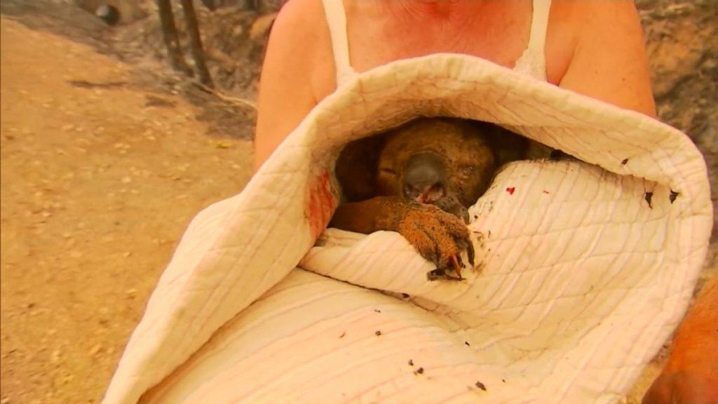 Incendi, una donna si getta tra le fiamme per salvare un koala VIDEO