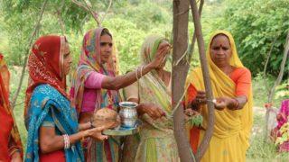 india alberi
