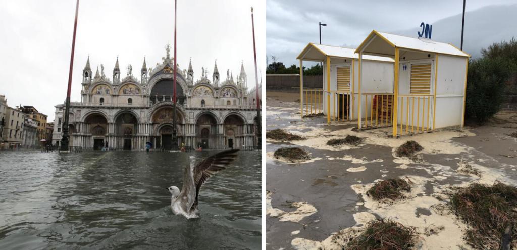 Venezia, a rischio pesci e uccelli. Spiagge devastate e invase da detriti
