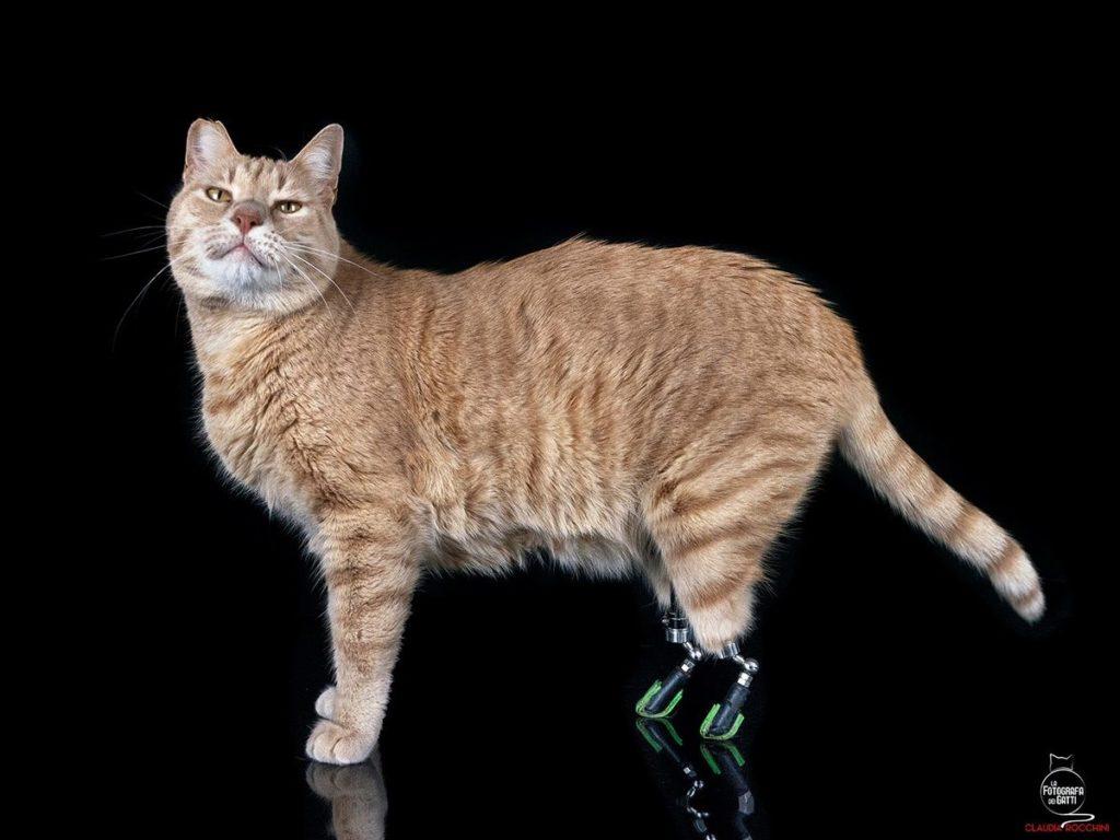 """Giornata del gatto, ecco la storia di Vituzzo il micio """"bionico"""""""