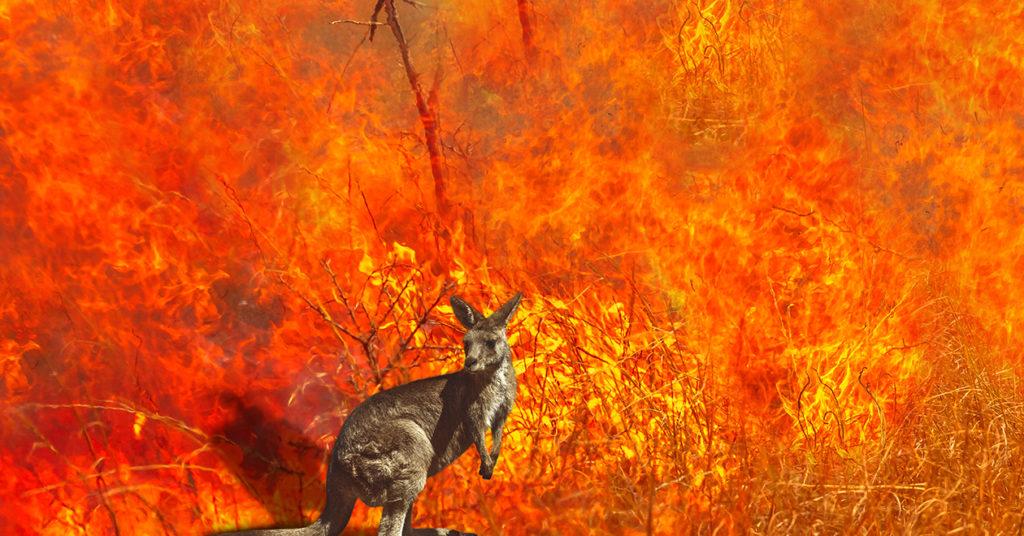 Australia, corsa contro il tempo per salvare le specie più rare dagli incendi