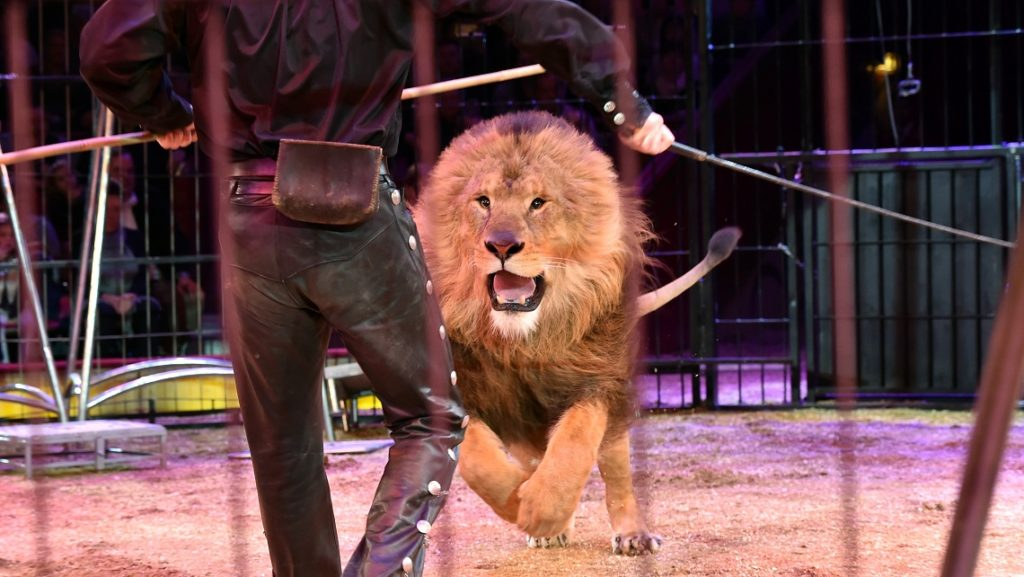 Circo senza animali, finalmente in Italia arrivano i primi risultati