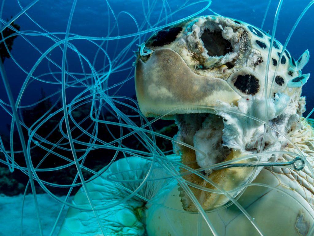 La foto simbolo dell'anno: la tartaruga morta strangolata dalle reti da pesca