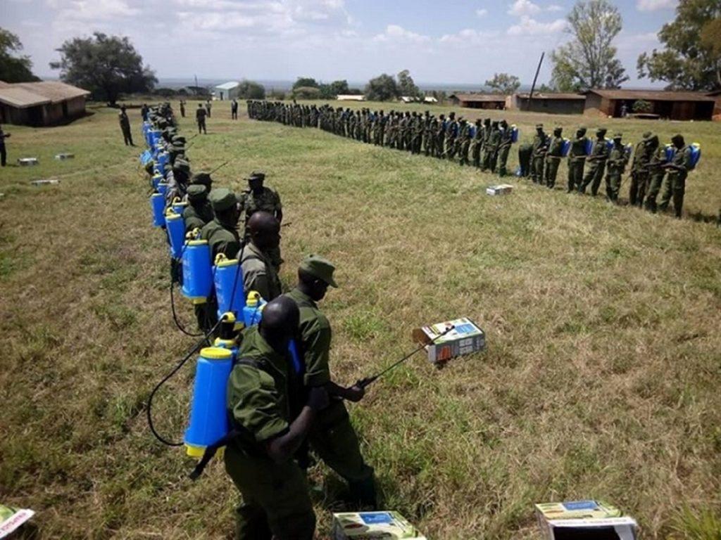 Invasione locuste, l'Uganda dispiega l'esercito per distruggere gli sciami